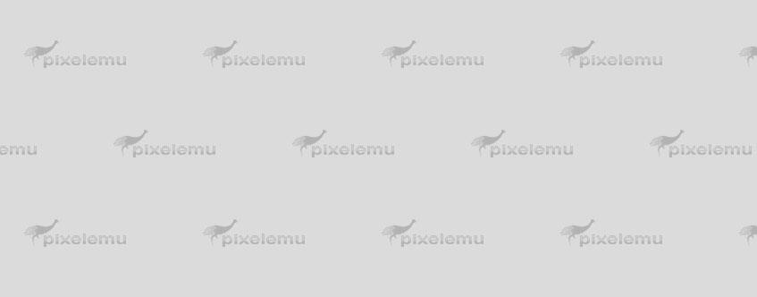 Phasellus vulputate ac dui aliquet dapibus.
